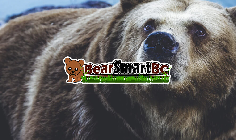 3 Bear-Themed Slot Games for Animal Lovers
