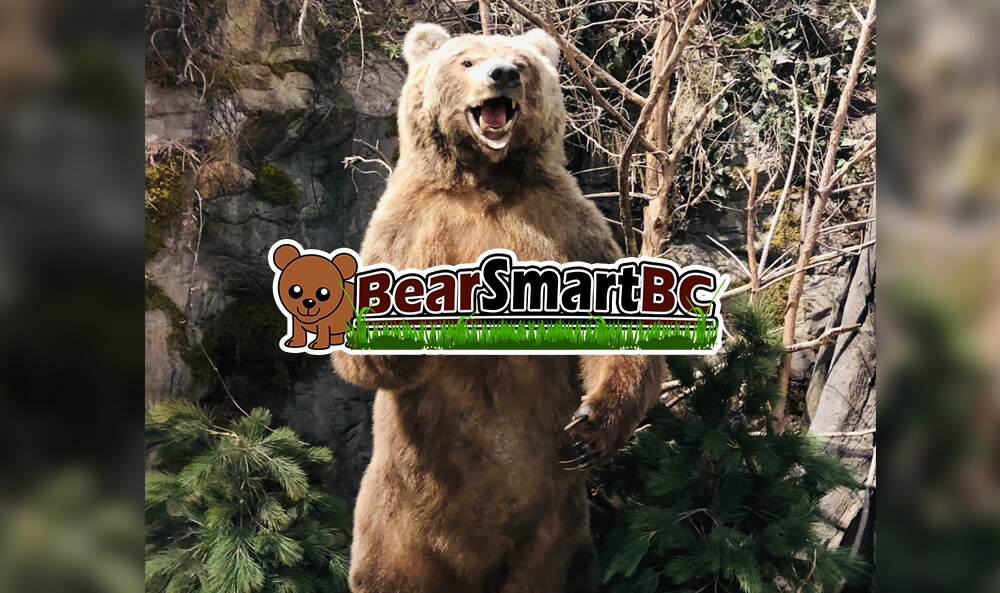 Bear Encounter – The Ultimate Survival Guide
