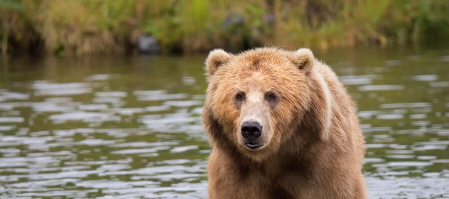 Featured image Bear Safety for Beginners Types of Bears Precautions and More Dont Alter the Bear Habitat - Bear Safety for Beginners - Types of Bears, Precautions, and More