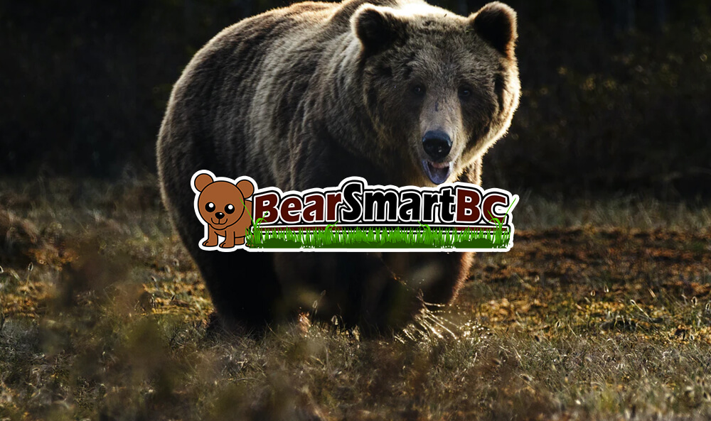 Bear Safety for Beginners – Types of Bears, Precautions, and More