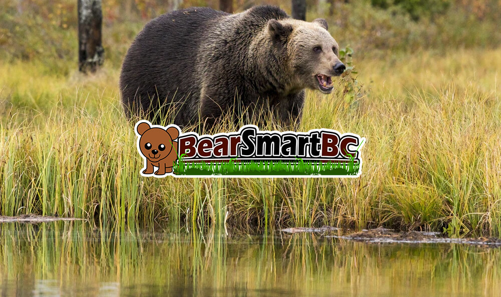 Bears and Their Importance for the Ecosystem