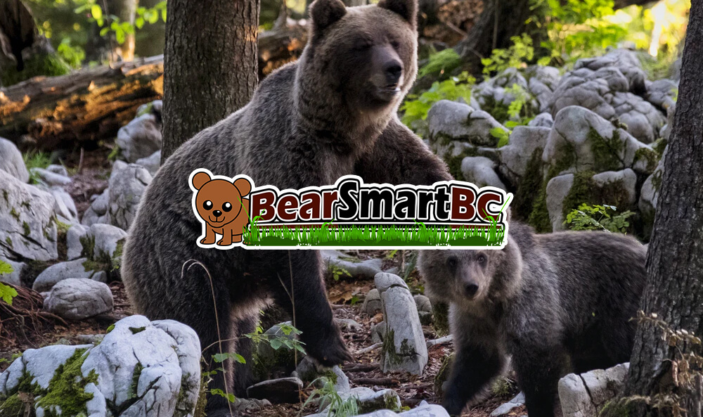 Online Casinos Strategies to Help Bear and Wildlife Preservation
